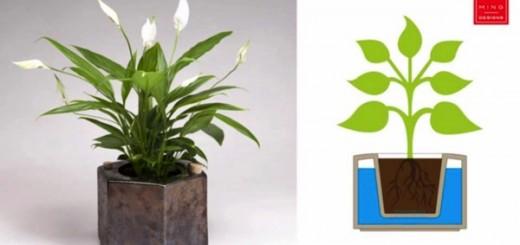 旅行から帰ってきたら植物が枯れていた。そんな悩みを解決してくれるプランター「Eco-pot」