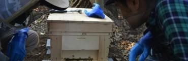養蜂デビューしました!道具・ミツバチの購入から巣箱の設置まで