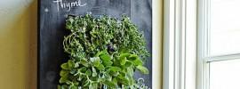 壁にハーブを飾ろう。せまい部屋でも持てる香り豊かな菜園