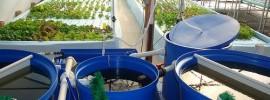 「未来の農業」としての可能性。海外で話題の循環型農法「アクアポニックス」とは