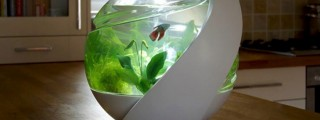 エコサイクル水槽「Avo」で、小さな生態系を感じよう